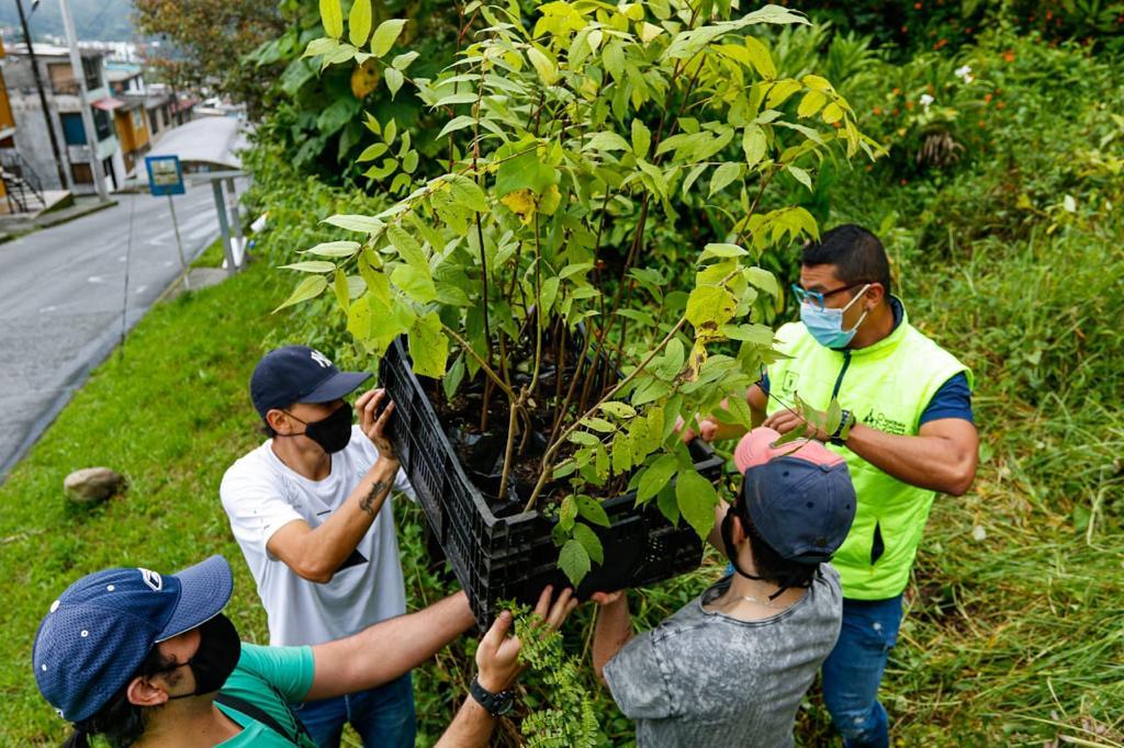Alcaldía de Manizales celebró el Día Nacional del Árbol con la siembra de 300 plántulas