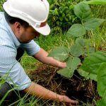 Secretaría de Medio Ambiente realizó 21 siembras en Milán, para compensar los siete árboles muertos retirados del sector